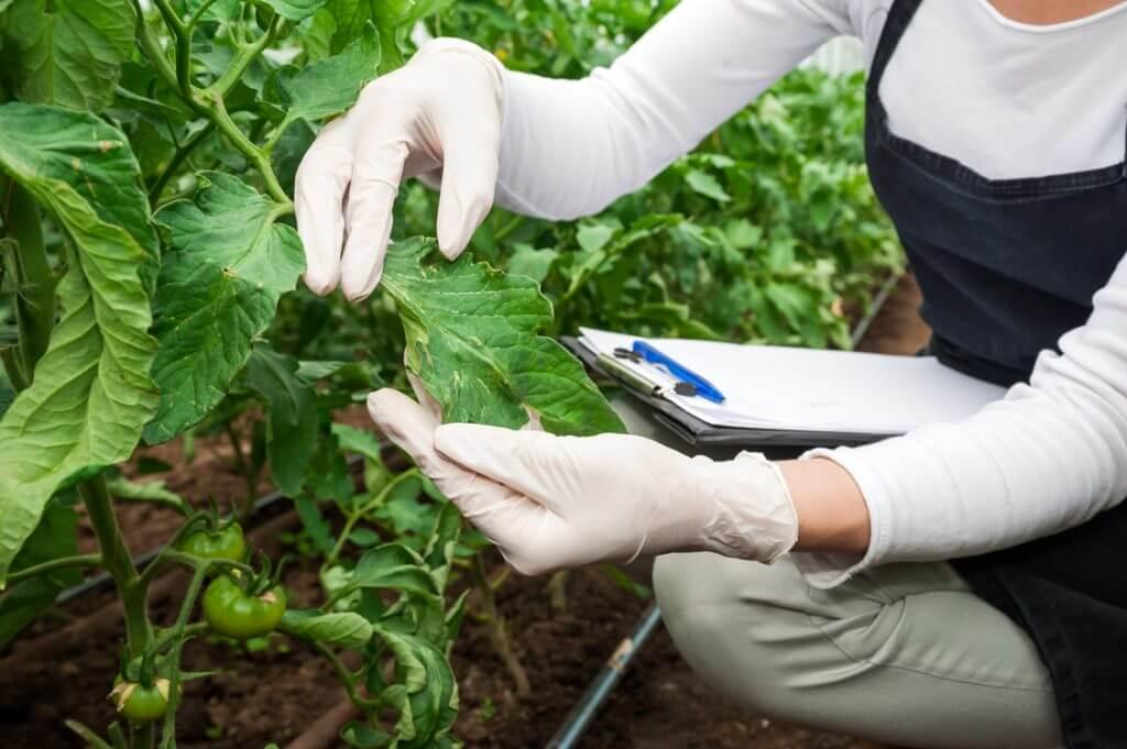 Voraudit Landwirtschaft