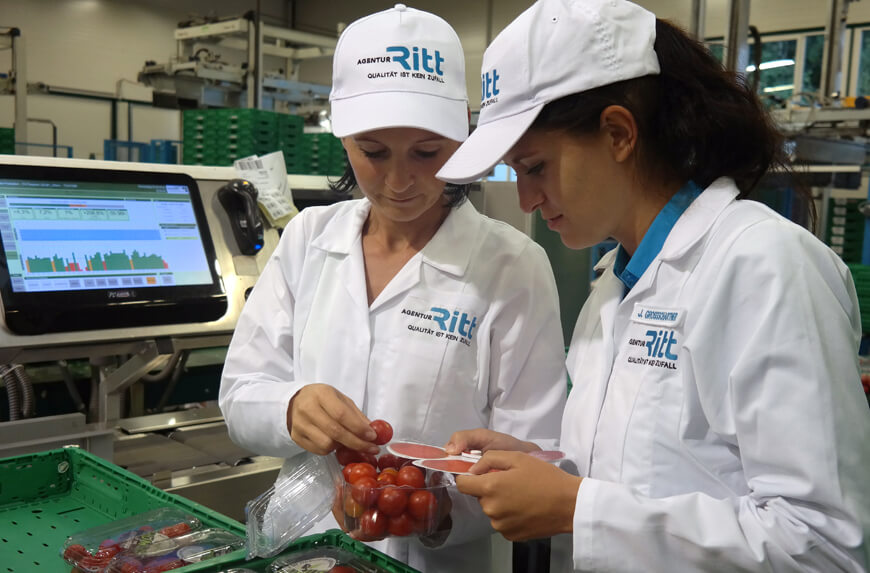 Qualitätskontrolle Lebensmittel Verarbeitung Tomaten